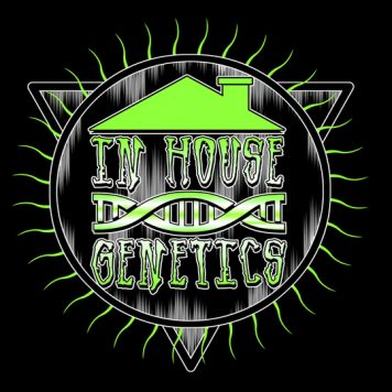 DNA Genetics - Kosher Sorbet - Trophy Seeds