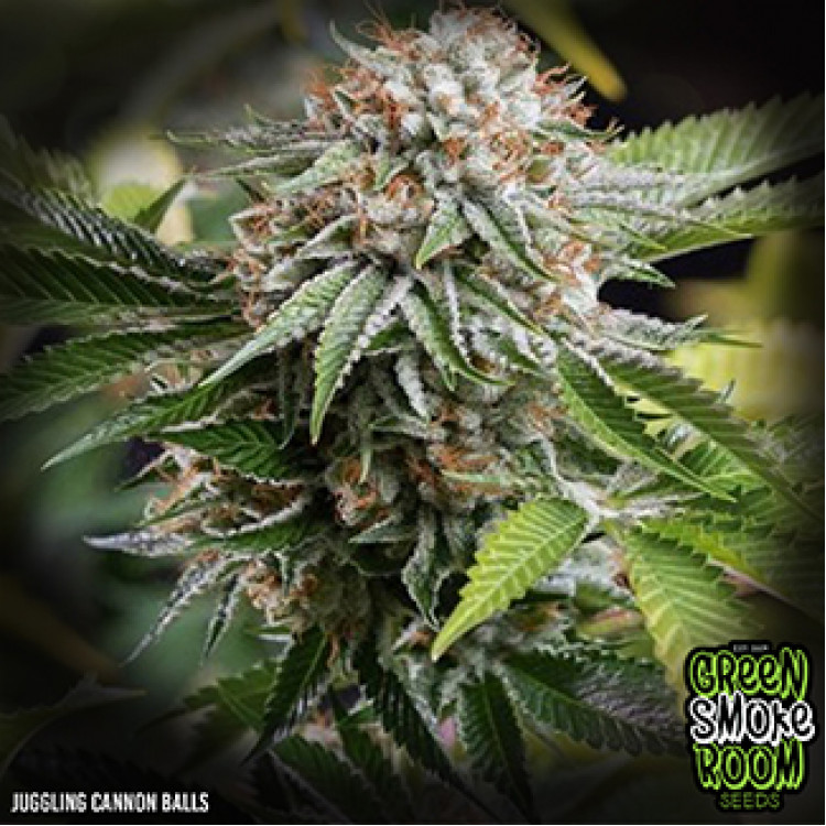 Green Smoke Room Seeds - Juggling Cannon Balls